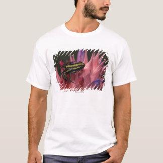 T-shirt Grenouille de dard