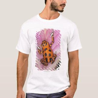 T-shirt Grenouille de dard d'île de deux points, pumilio