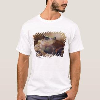 T-shirt Grenouille de gazouillement de falaise,