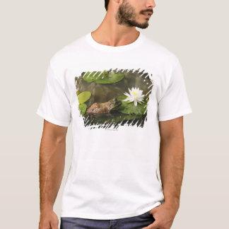 T-shirt Grenouille mugissante dans l'étang de lis