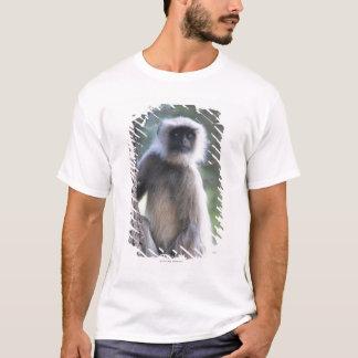 T-shirt Gris ou terrain communal ou langur de Hanuman