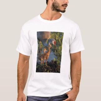 T-shirt Grue de Sandhill avec des poussins, la Floride