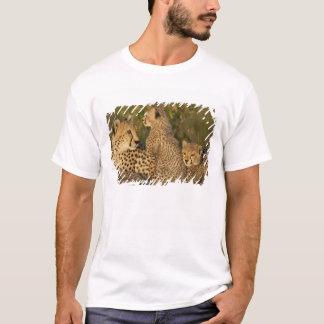T-shirt Guépard, jubatus d'Acinonyx, Mara supérieur, masai