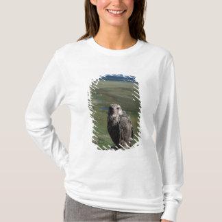 T-shirt gyrfalcon, rusticolus de Falco, obtention juvénile