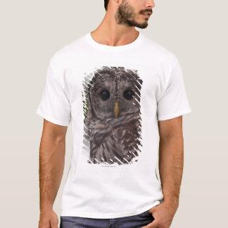 T-shirt Hibou barré de jeune (varia de Strix)