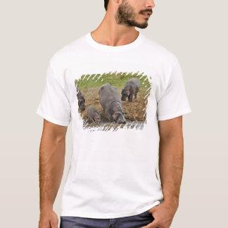 T-shirt Hippopotame, amphibius d'hippopotame, Serengeti