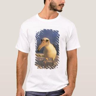 T-shirt Immutabilis d'albatros, de Diomedea de Laysan),