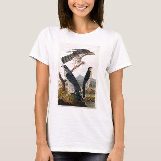 T-shirt J.J. Audubon (autour, faucon de Stanley) (1829)