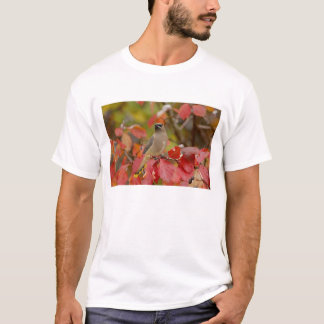 T-shirt Jaseur de cèdre adulte sur l'aubépine avec la