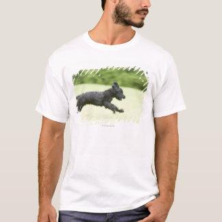 T-shirt Jeune (5 mois) Briard noir (Berger de Brie),