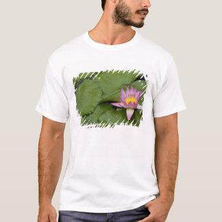 T-shirt La Chine, Hong Kong, nouveaux territoires. Chi Lin