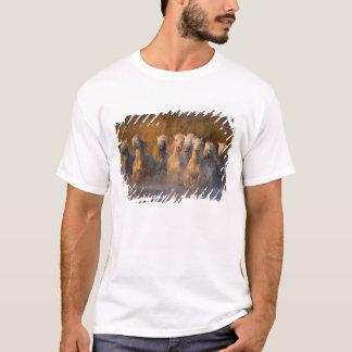T-shirt La France, Provence. Chevaux blancs de Camargue