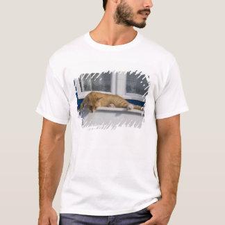 T-shirt La Grèce, Mykonos. Regards oranges curieux de chat