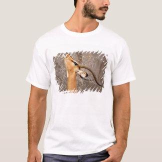 T-shirt La Namibie, Etosha NP.  Le noir a fait face à