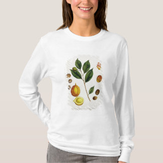 """T-shirt La noix de muscade, plaquent 353 """"d'un de fines"""