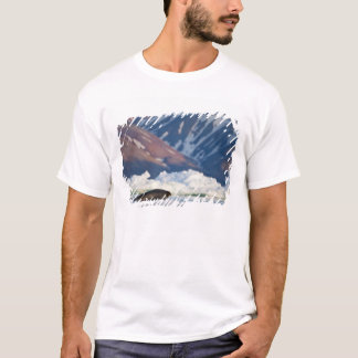 T-shirt La Norvège, le Svalbard, île du Spitzberg, 2