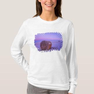 T-shirt La paille d'hiver emballe près du nord de