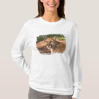 T-shirt La panthère des Etats-Unis, la Floride (concolor