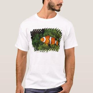 T-shirt La Papouasie-Nouvelle-Guinée, anemonefish faux de