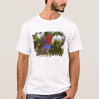 T-shirt La Papouasie-Nouvelle-Guinée, Lae. Perroquet