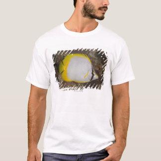 T-shirt La vie sous-marine, POISSON : Spotfin coloré
