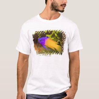 T-shirt La vie sous-marine, POISSON :  un Basslet féerique