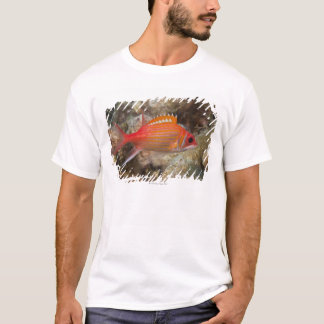 T-shirt La vie sous-marine, POISSON :  un Squirrelfish de