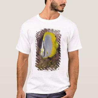 T-shirt La vie sous-marine, POISSON :  Un tropical coloré
