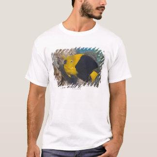 T-shirt La vie sous-marine, POISSON :  Une beauté de roche