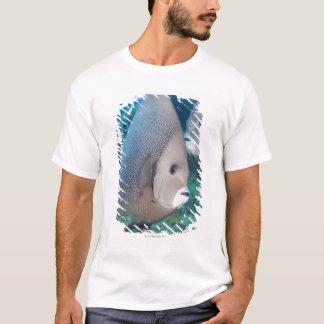 T-shirt La vie sous-marine, POISSON :  une paire de