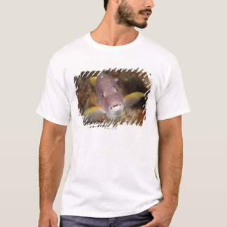 T-shirt La vie sous-marine ; POISSONS :  Fermez-vous vers