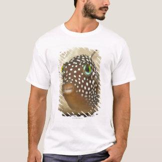 T-shirt La vie sous-marine ; POISSONS :  Portrait en gros