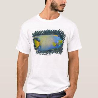 T-shirt La vie sous-marine ; POISSONS :  Scalaire de la
