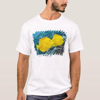 T-shirt La vie sous-marine ; POISSONS : Une paire de