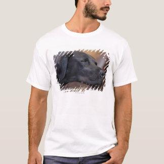 T-shirt Labrador noir endormi sur le sofa, plan rapproché