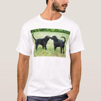 T-shirt Labrador retriever noir