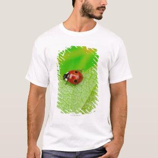 T-shirt Ladybird marchant à travers une feuille