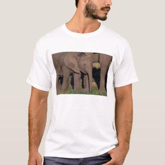 T-shirt L'Afrique, Botswana, delta d'Okavango. Éléphants