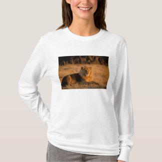 T-shirt L'Afrique, Botswana, delta d'Okavango. Lion