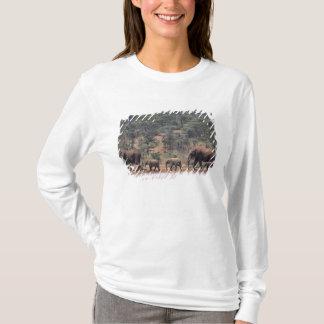 T-shirt L'Afrique, Kenya, Nanyuki, Mpala. Africain