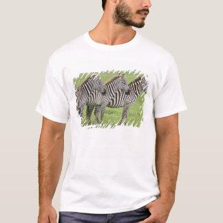 T-shirt L'Afrique. La Tanzanie. Zèbres au cratère de