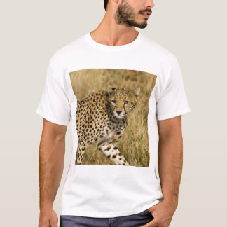 T-shirt L'Afrique. Le Kenya. Guépard chez Samburu NP. 3