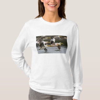 T-shirt L'Afrique. Le Kenya. Pélicans blancs en vol au lac