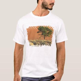 T-shirt L'Afrique, Namibie, parc national de Namib,