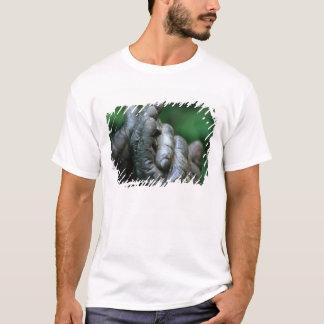 T-shirt L'AFRIQUE, Tanzanie, parc national de Gombe, mâle