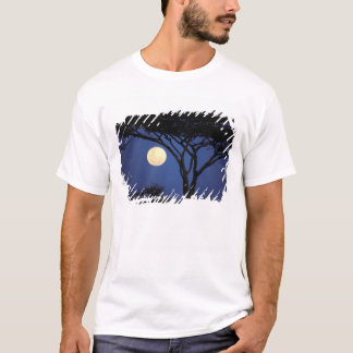 T-shirt L'Afrique, Tanzanie, Tarangire. Arbre d'acacia