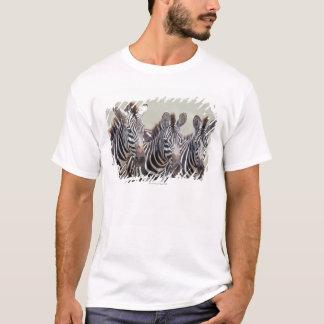T-shirt L'Afrique, Tanzanie, zèbres