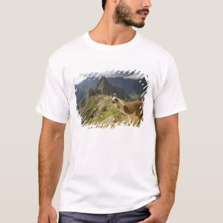 T-shirt Lamas et un regard fini de Machu Picchu,