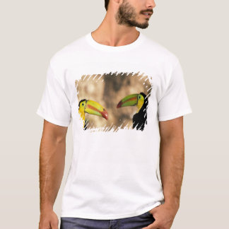 T-shirt L'Amérique Centrale, Honduras. toucan