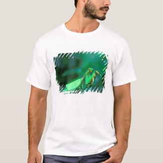 T-shirt L'Amérique Centrale, Panama, île de Barro le